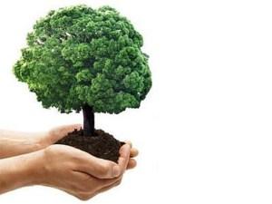 ambiente_albero in mano